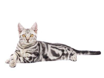 """""""Wenn eine Katze in Ihr Leben tritt,..."""