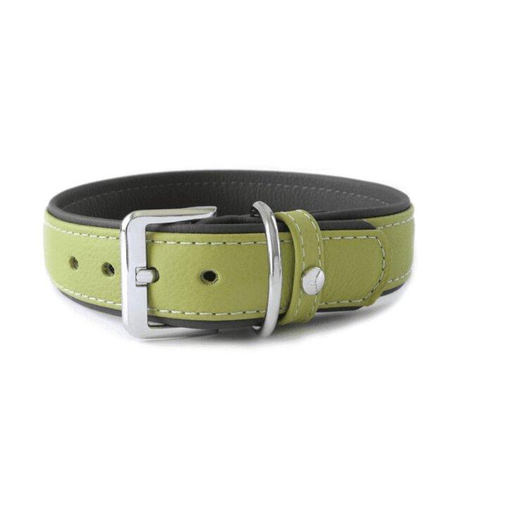 Hundehalsband Amsterdam Lime / Lava Breite 30 mm / Länge 50 cm