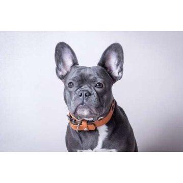 Das Lerderband Hundehalsband Granada Walnut / Black Länge 50 cm Breite 40 mm