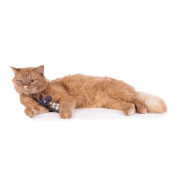 Hunter Katzenspielzeug Elroy